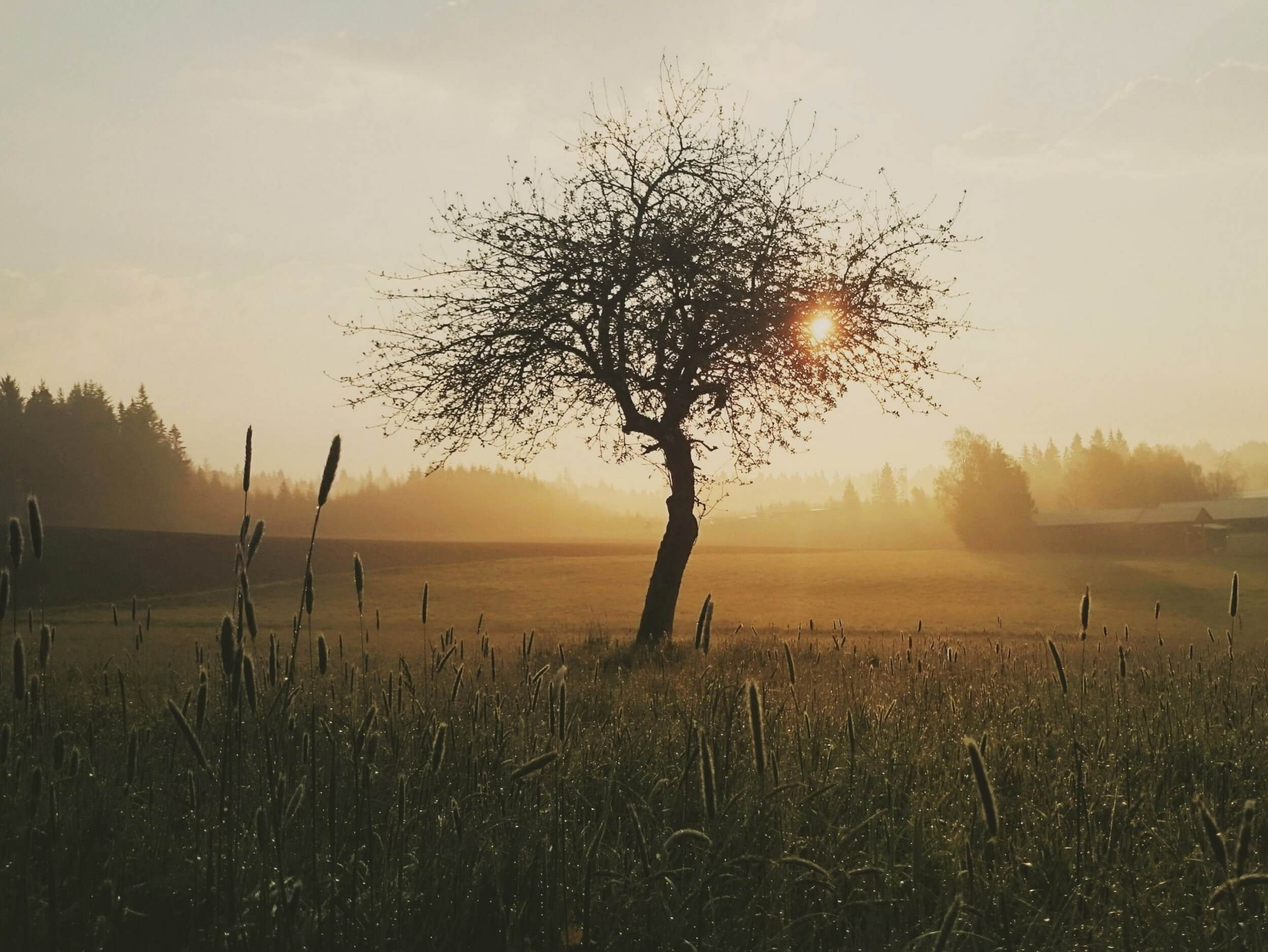tree-morning-nature-sunrise-163513 compressed